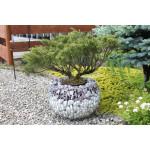 Gabiónový kvetináč guľa výška 32 cm, stredový priemer 49cm, horný priemer 40 cm